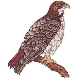 Red-tailed Hawk embroidery design