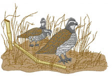 BOBWHITE QUAIL embroidery design