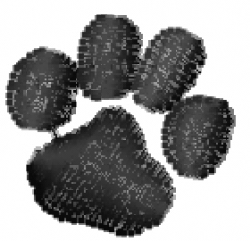 Blizzard Fleece Fabric-Black White Paw Print : fleece