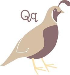 Quail Q print art