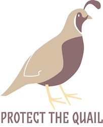 Protect The Quail print art