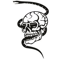 Snake Skull print art