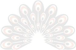 White Peacock print art