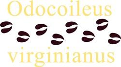 Odocoileus Virginianus print art