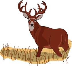Whitetail Deer print art