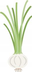 Green Onion print art