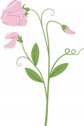 Sweet Pea Flower print art