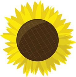 Sunflower Bloom print art