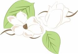 Magnolia Blooms print art