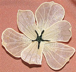 Lily center fringe small embroidery design