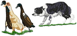 Border Collie Dog Herding Ducks embroidery design