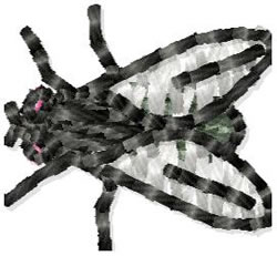 House Fly embroidery design