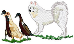 Samoyed Dog With Ducks embroidery design