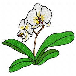 Moth Orchid embroidery design