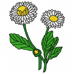 English Daisy embroidery design
