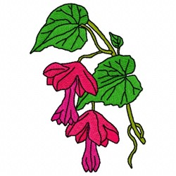 Rhodochiton Flower embroidery design