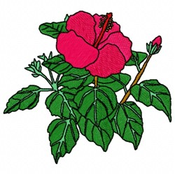 Chinese Rose embroidery design