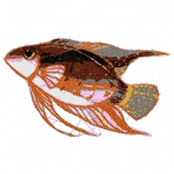 Fancy Fish embroidery design