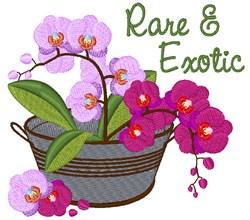 Rare & Exotic embroidery design