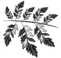 Black Fern embroidery design