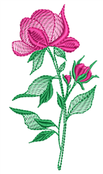 Sketched Rose embroidery design