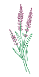 Sketched Lavender embroidery design