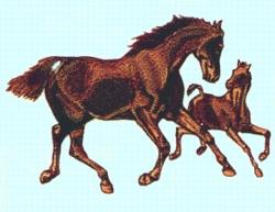 Mare & Colt embroidery design