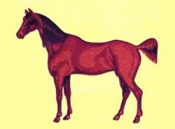 Stallion embroidery design