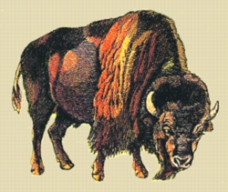 Buffalo embroidery design