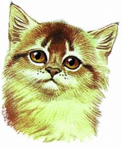 Red Samali Kitten embroidery design