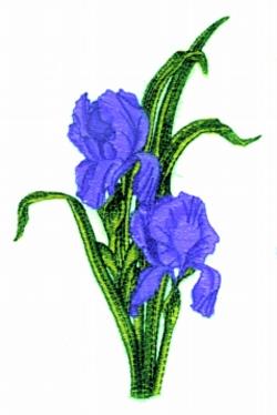 Double Iris embroidery design