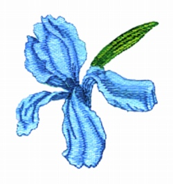 Iris flower embroidery design