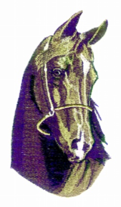 Black Stallion embroidery design