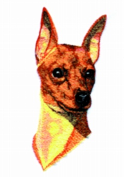 Miniature Pinscher embroidery design