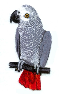 African Grey embroidery design