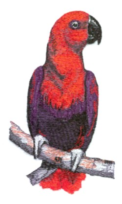 Eclectus Parrot embroidery design