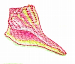 Shell embroidery design