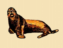 Seal embroidery design