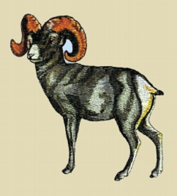 Big Horn Sheep embroidery design