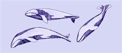 Swimming Whales embroidery design