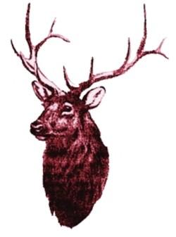 Elk embroidery design