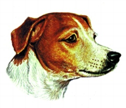 Jack Russell Terrier embroidery design