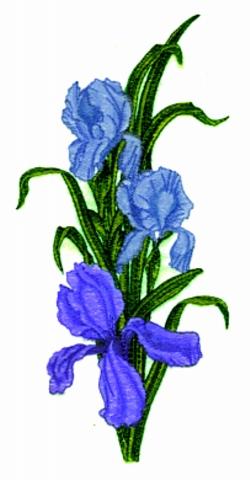 Iris embroidery design