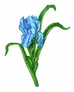 Single Iris embroidery design