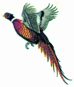 Pheasant in Flight embroidery design