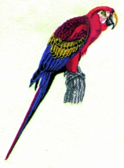 Scarlet Macaw embroidery design