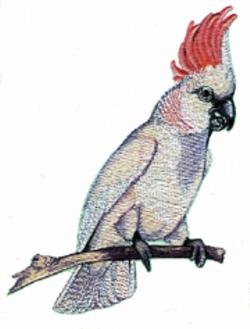 Moluccan Cockatoo embroidery design