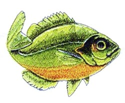 Sunfish embroidery design
