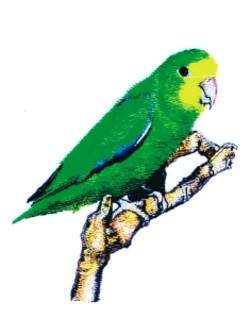 Parrotlet embroidery design