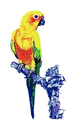 Sun Conyer embroidery design